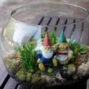 gnome terrarium succulents