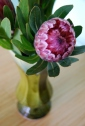 protea in vintage green vase-002